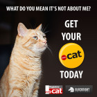 Save big on .cat domain registration