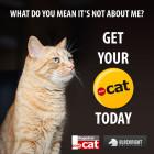 Save big on .cat domain registration