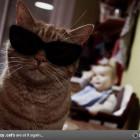 Crazy-Cats