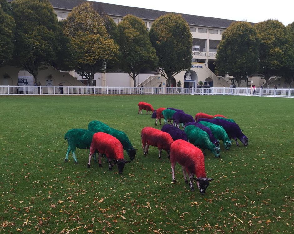 Sheep dyed in the web summit colours at Dublin's RDS