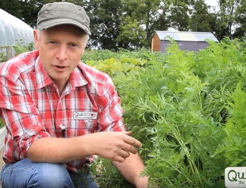 Sligo Grow-it-Yourself Business Wins Our Newsletter Camera Competition